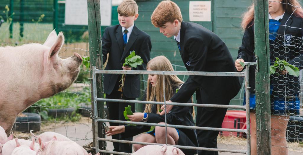 study land science at bebington school farm
